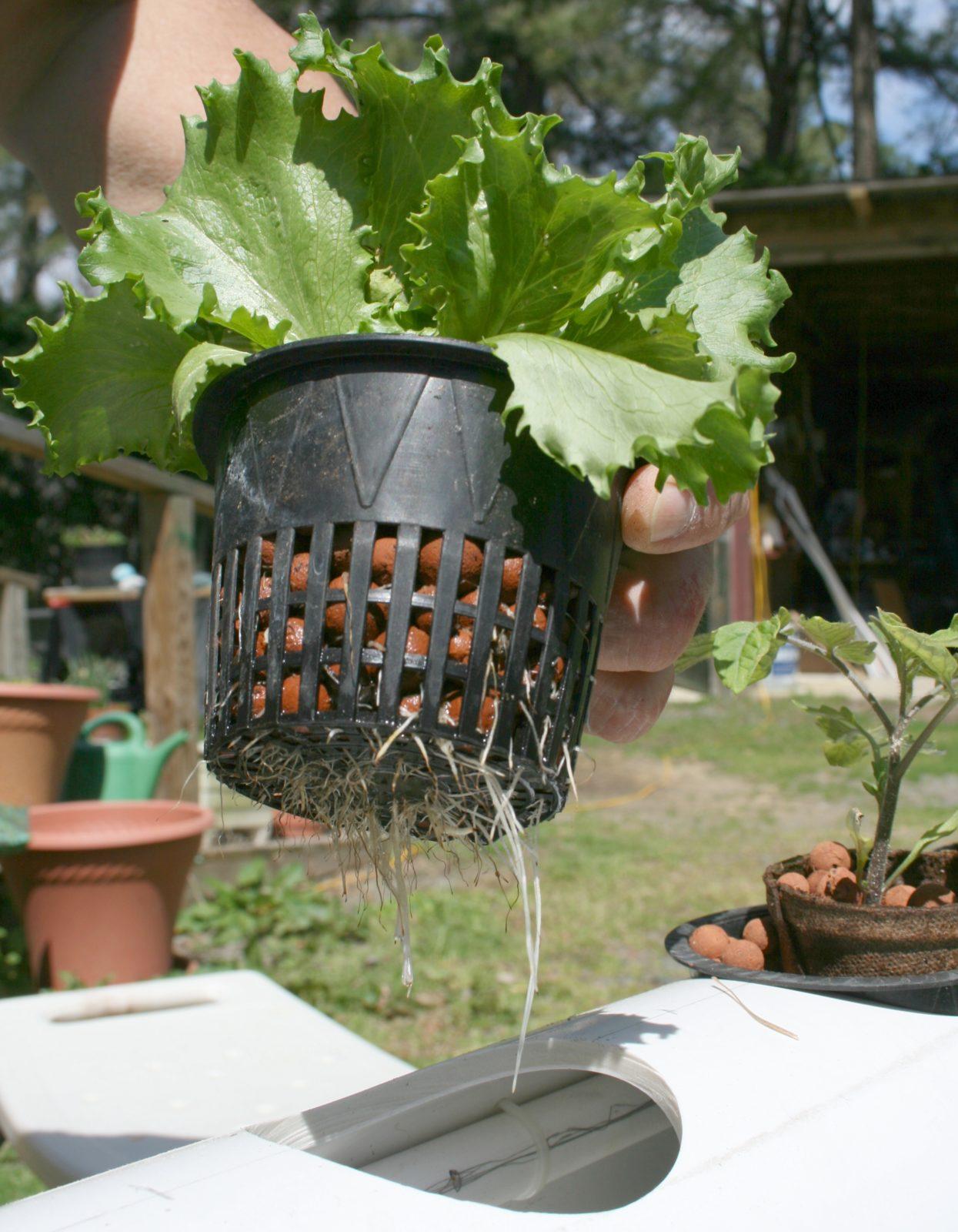 Гидропонная установка для выращивания зелени дома: сборка и 80